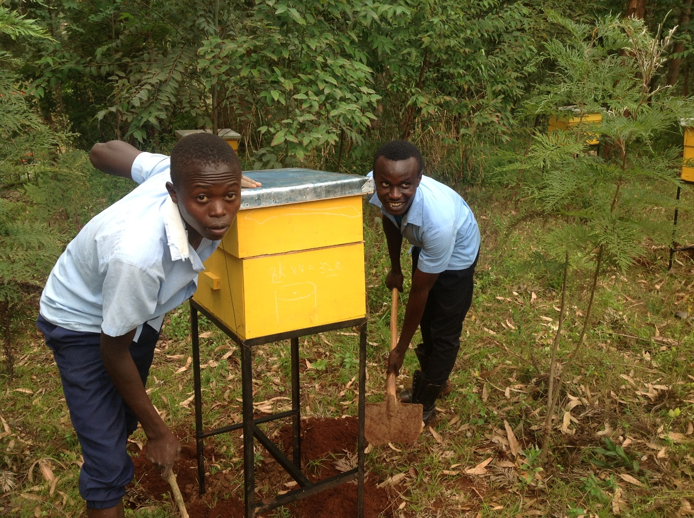 Students installing a beehive given by Kiini Sustainable Initiative